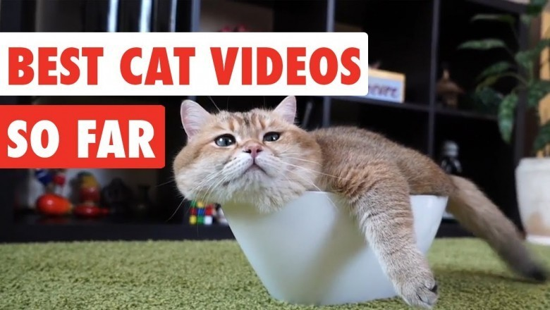 Funny Cat Compilation