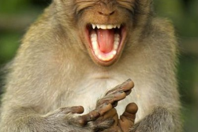 Monkey is so happy you know why!!!